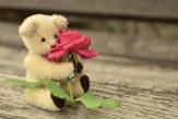 teddy-889892_1280
